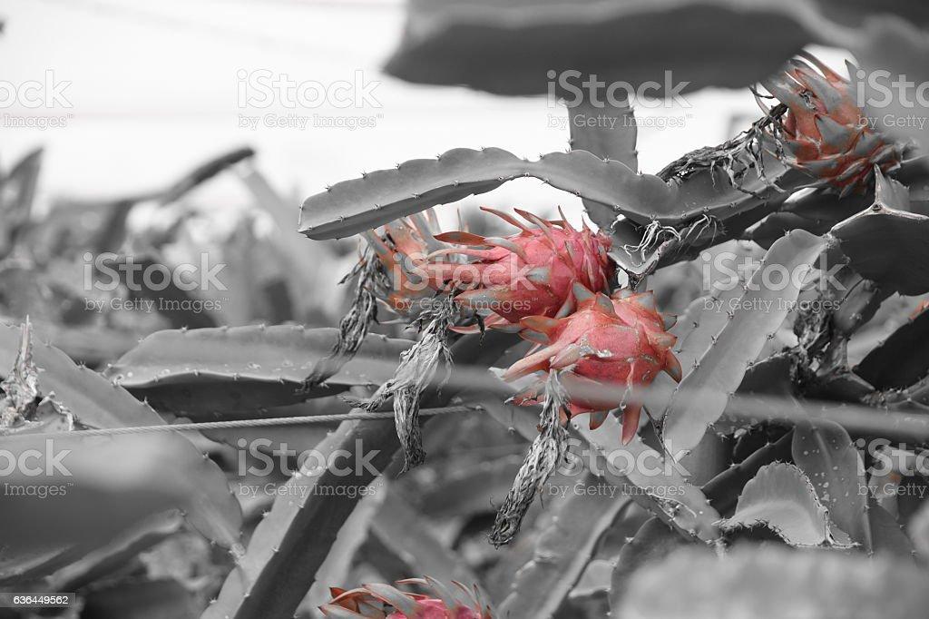 Cactus IN THE rain stock photo