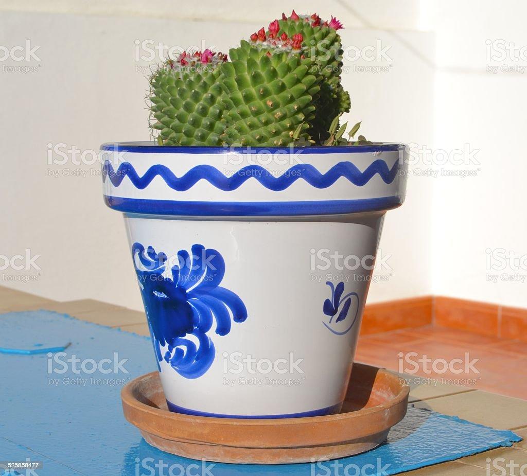 Cactus in vaso decorato stock photo