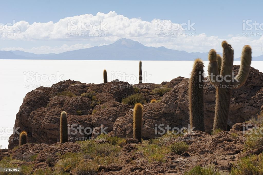 Cactus Island Incahuasi in Uyuni Salt Flats stock photo