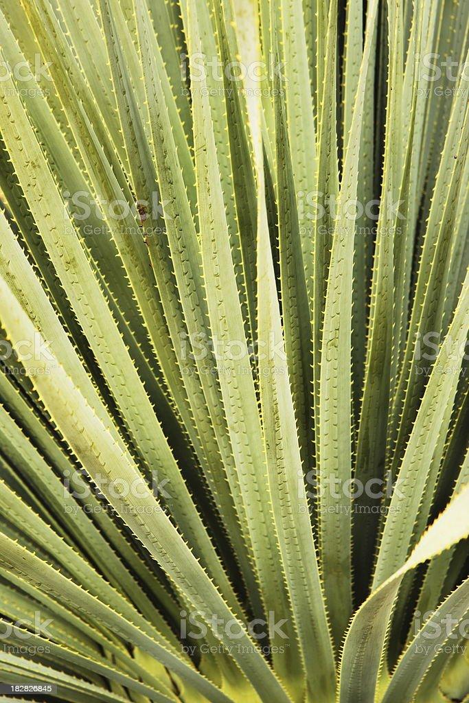 Cactus Leaf Frond Desert Plant stock photo