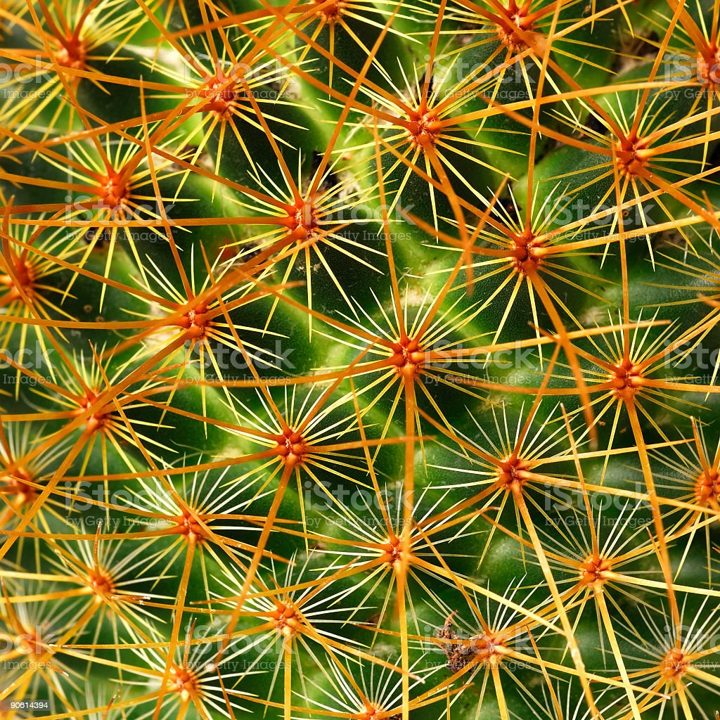 cactus macro stock photo