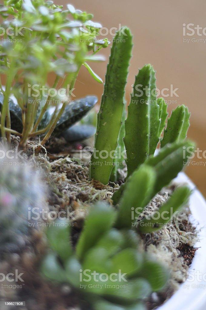 cactus made mini garden stock photo