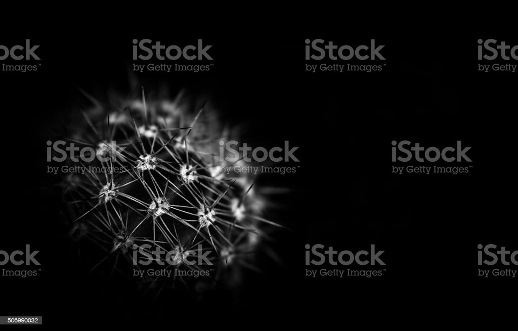 Cactus. Meconopsis in Spring stock photo