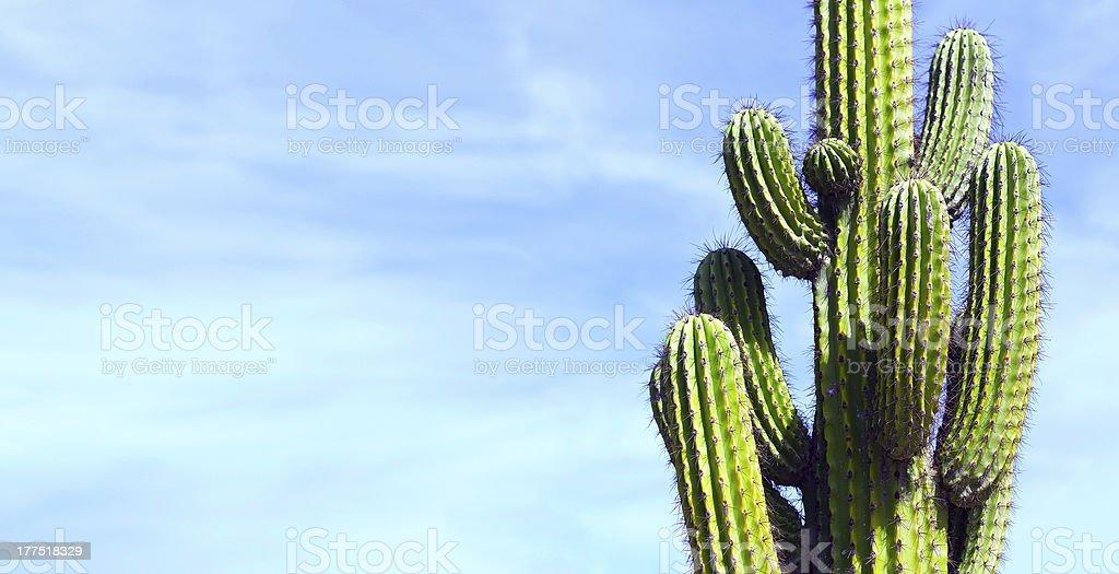 Cactus, Mexico stock photo