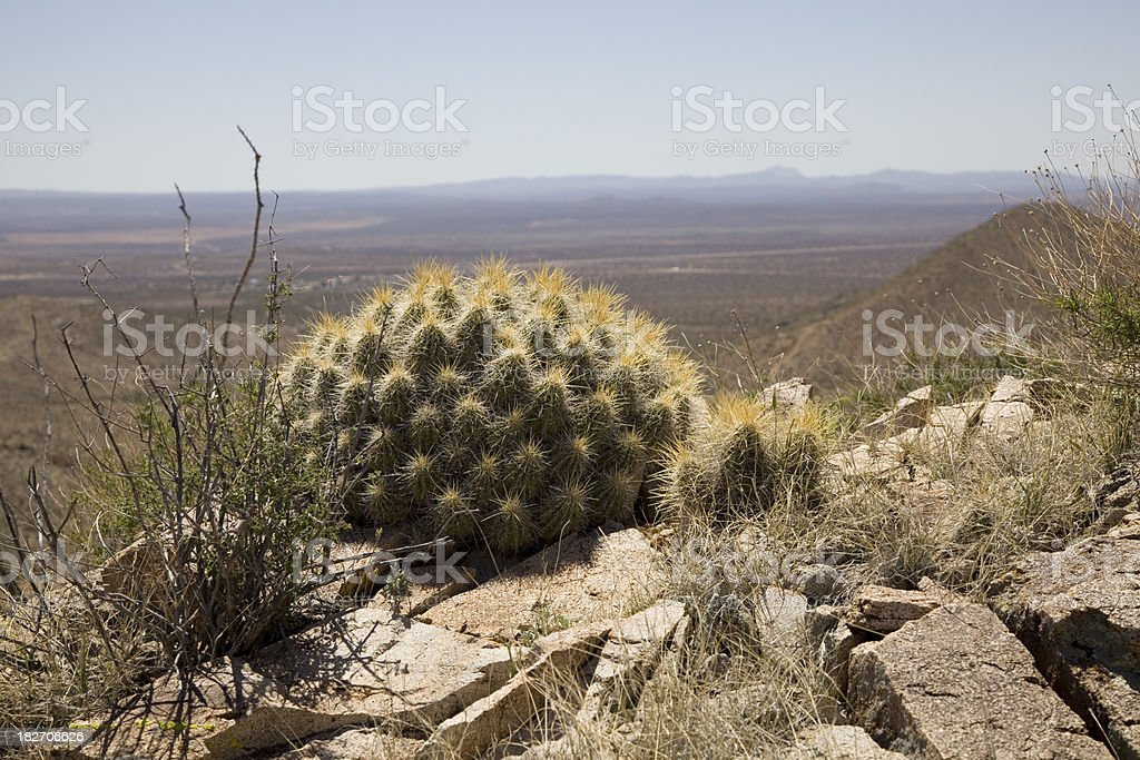 Cactus Mound in the Desert Southwest royalty-free stock photo