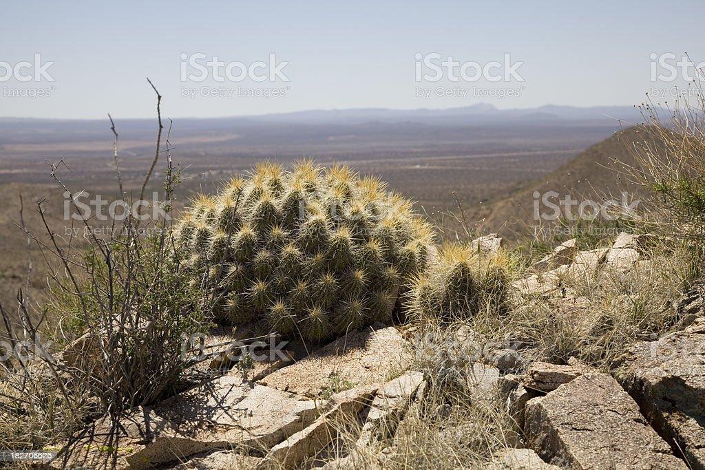 Cactus Mound in the Desert Southwest stock photo