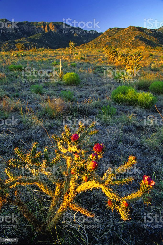 cactus mountain sunset royalty-free stock photo