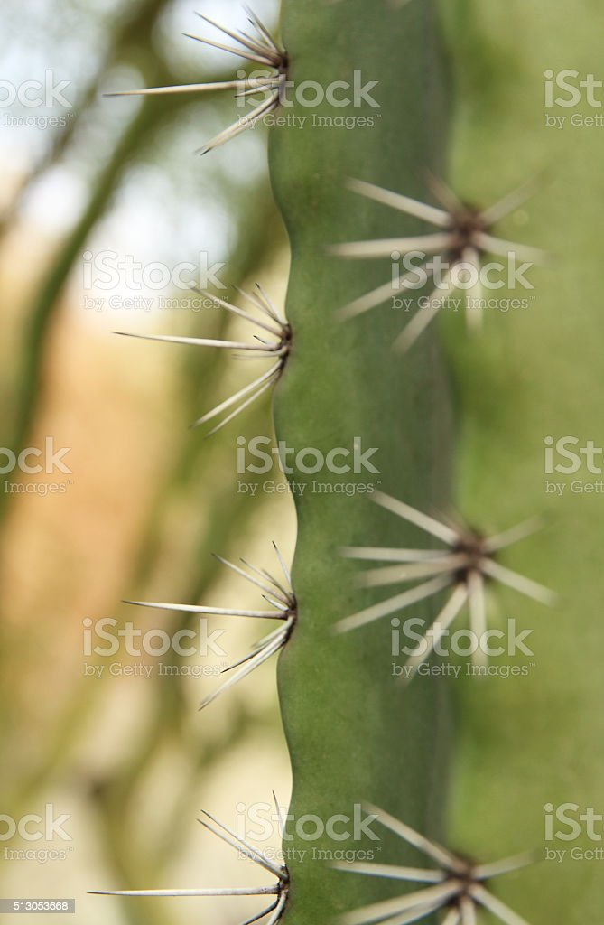 Cactus Needles stock photo