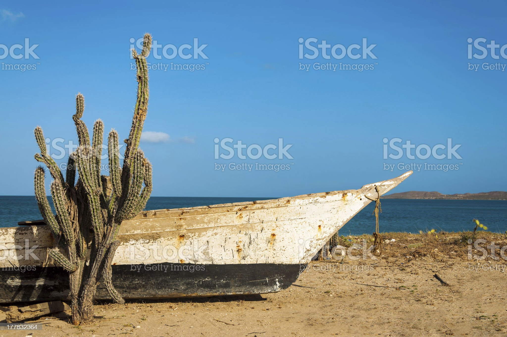 Cactus on a Beach royalty-free stock photo