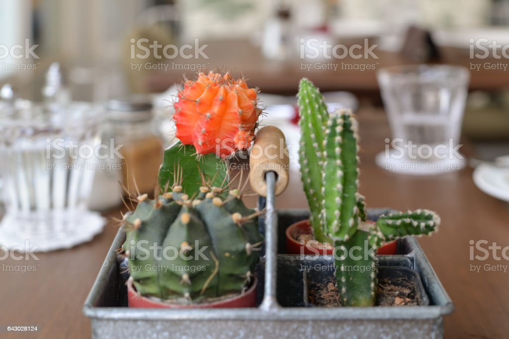 Cactus on a dining table stock photo