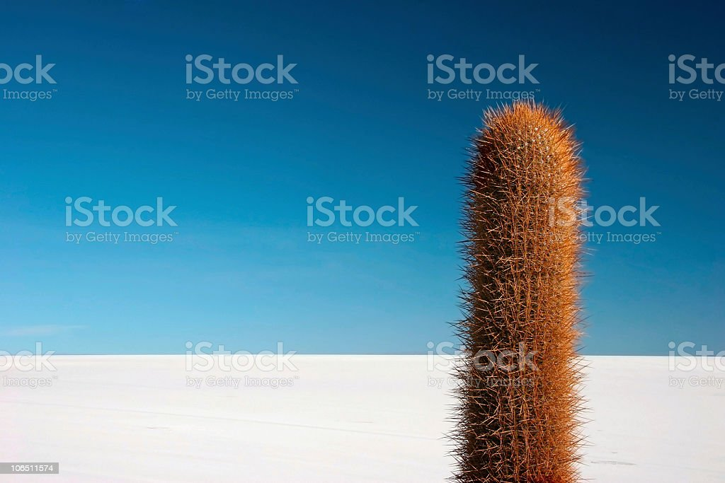 Cactus on Isla De Los Pescadores stock photo