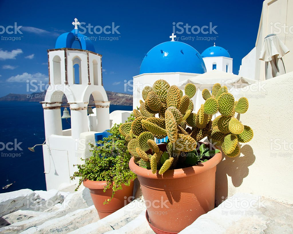 Cactus On Santorini royalty-free stock photo