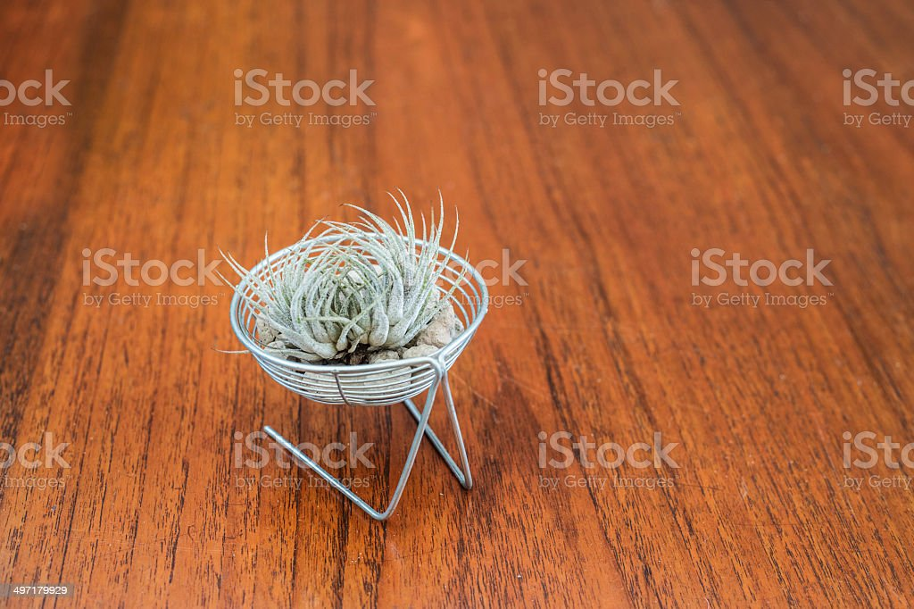 cactus on table stock photo