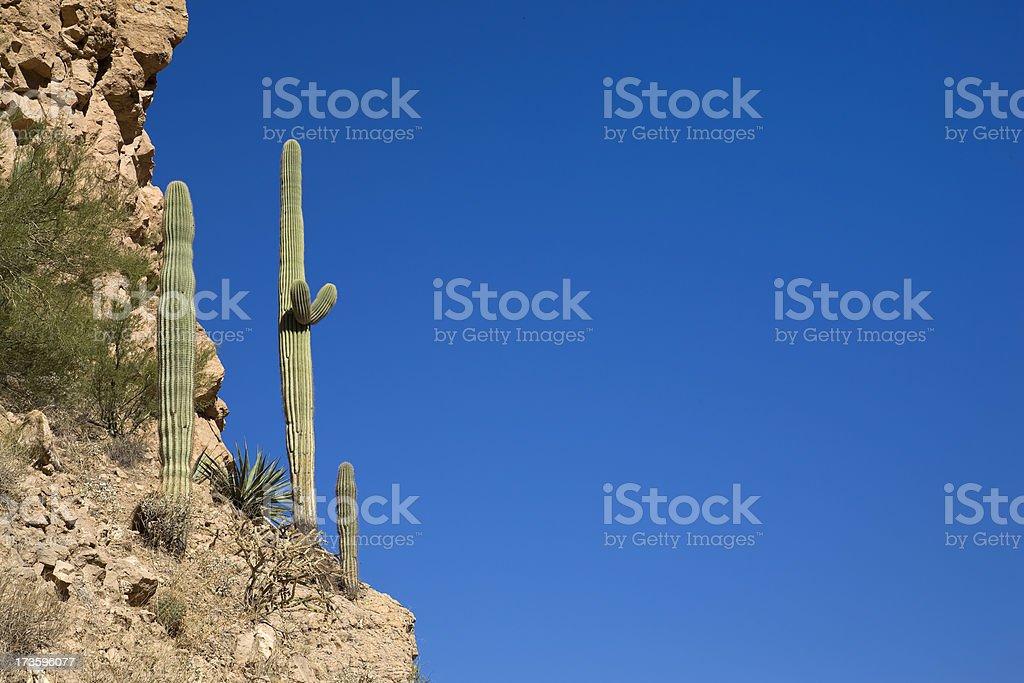 Cactus on the Ledge royalty-free stock photo