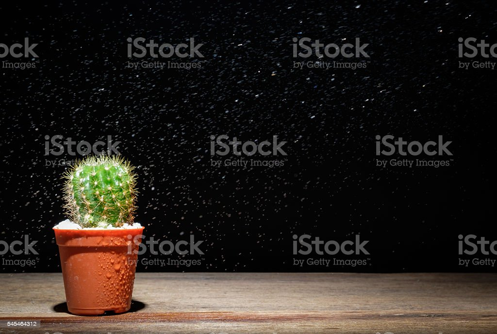 Cactus on wooden floor with water spray. stock photo