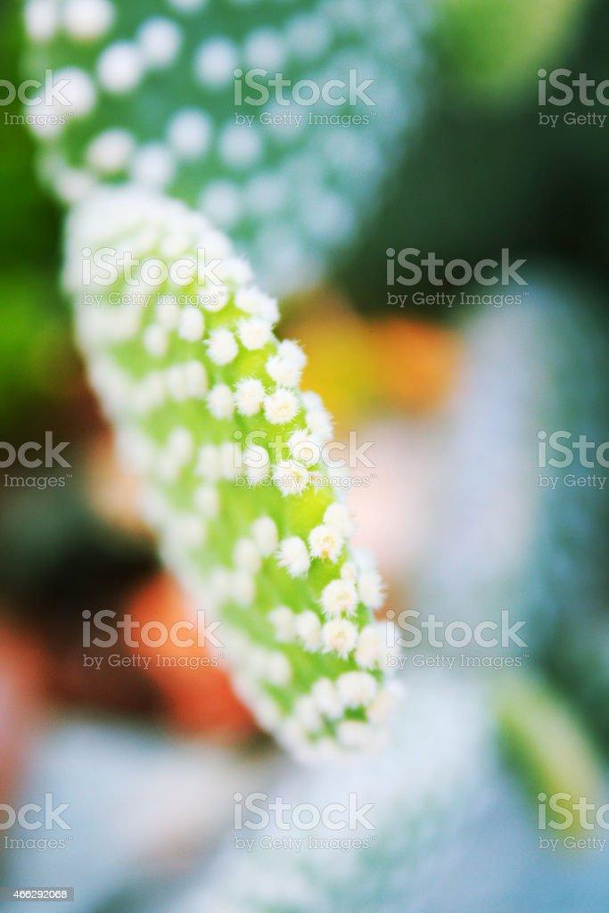 Cactus (succulent plant) stock photo
