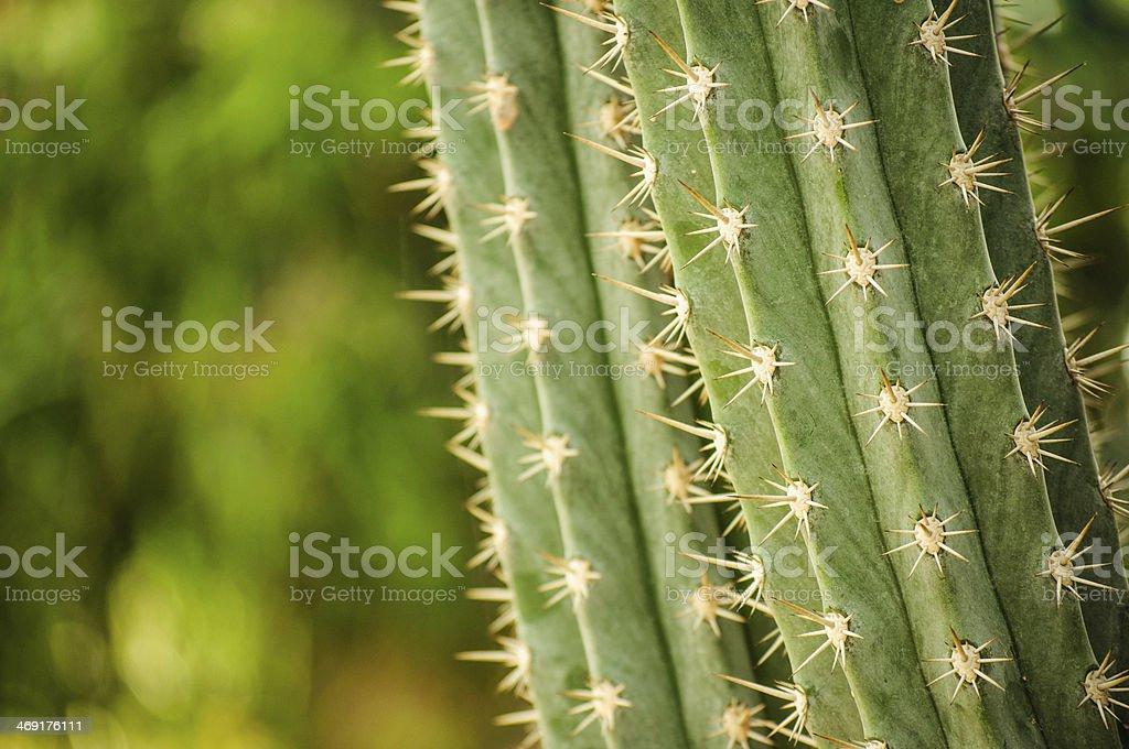 Cactus royalty-free stock photo