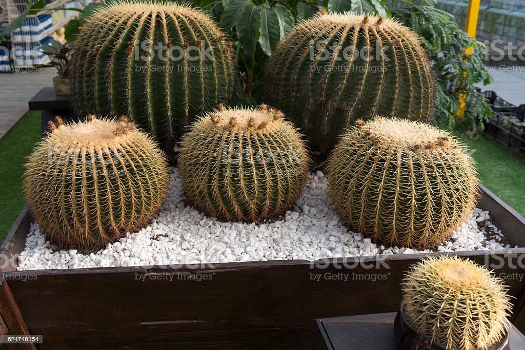 Cactus. stock photo