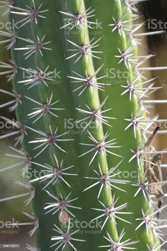 Cactus. stock photo