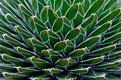 Cactus plant closeup