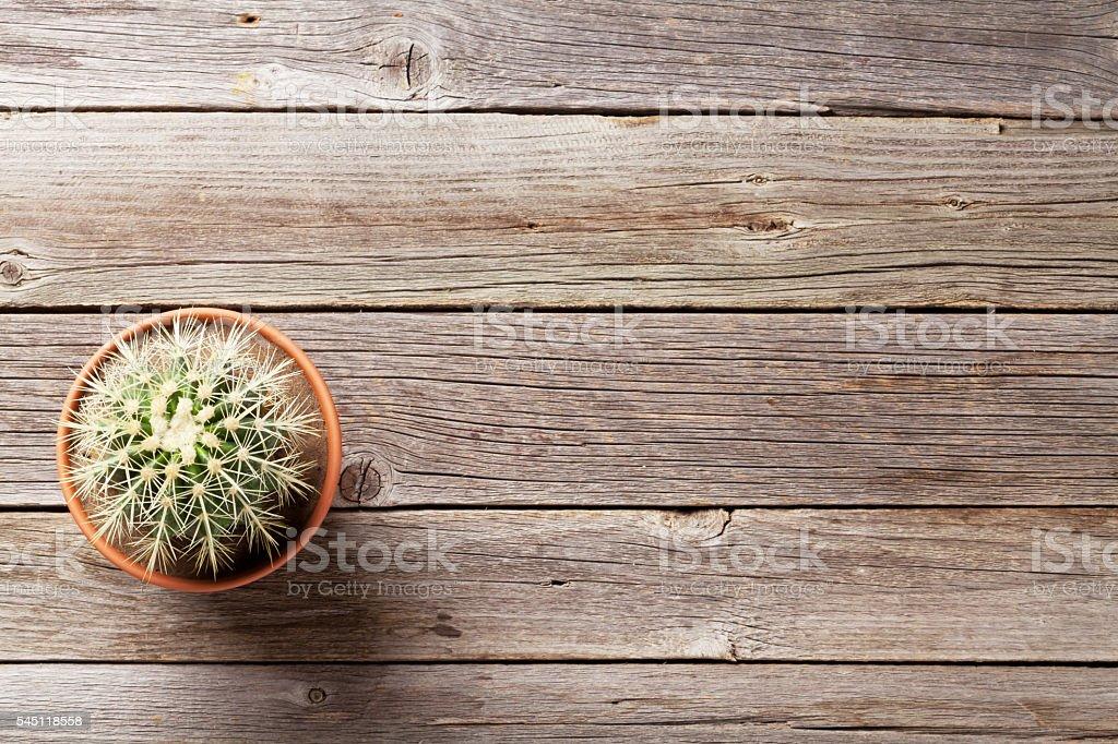 Cactus plant in flower pot stock photo