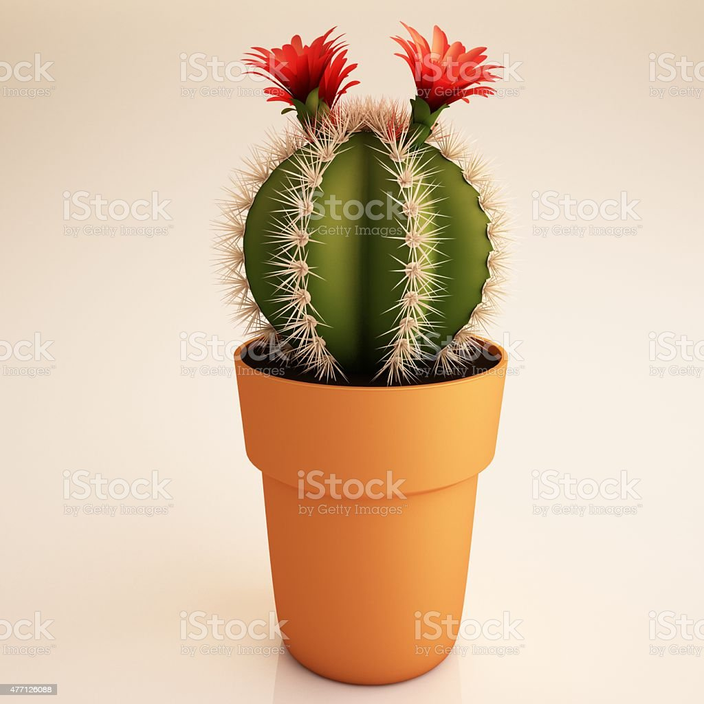 Cactus plant stock photo