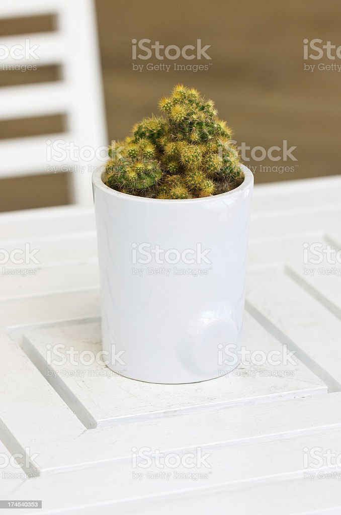 Cactus plant with white ceramic pot on wooden table. stock photo