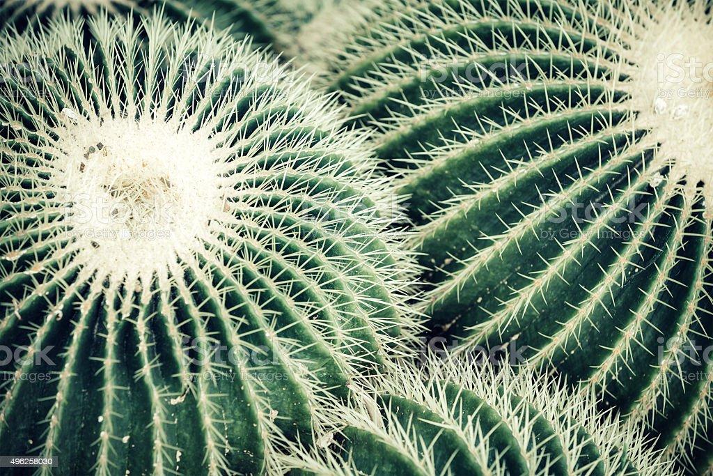 Cactus Plants stock photo
