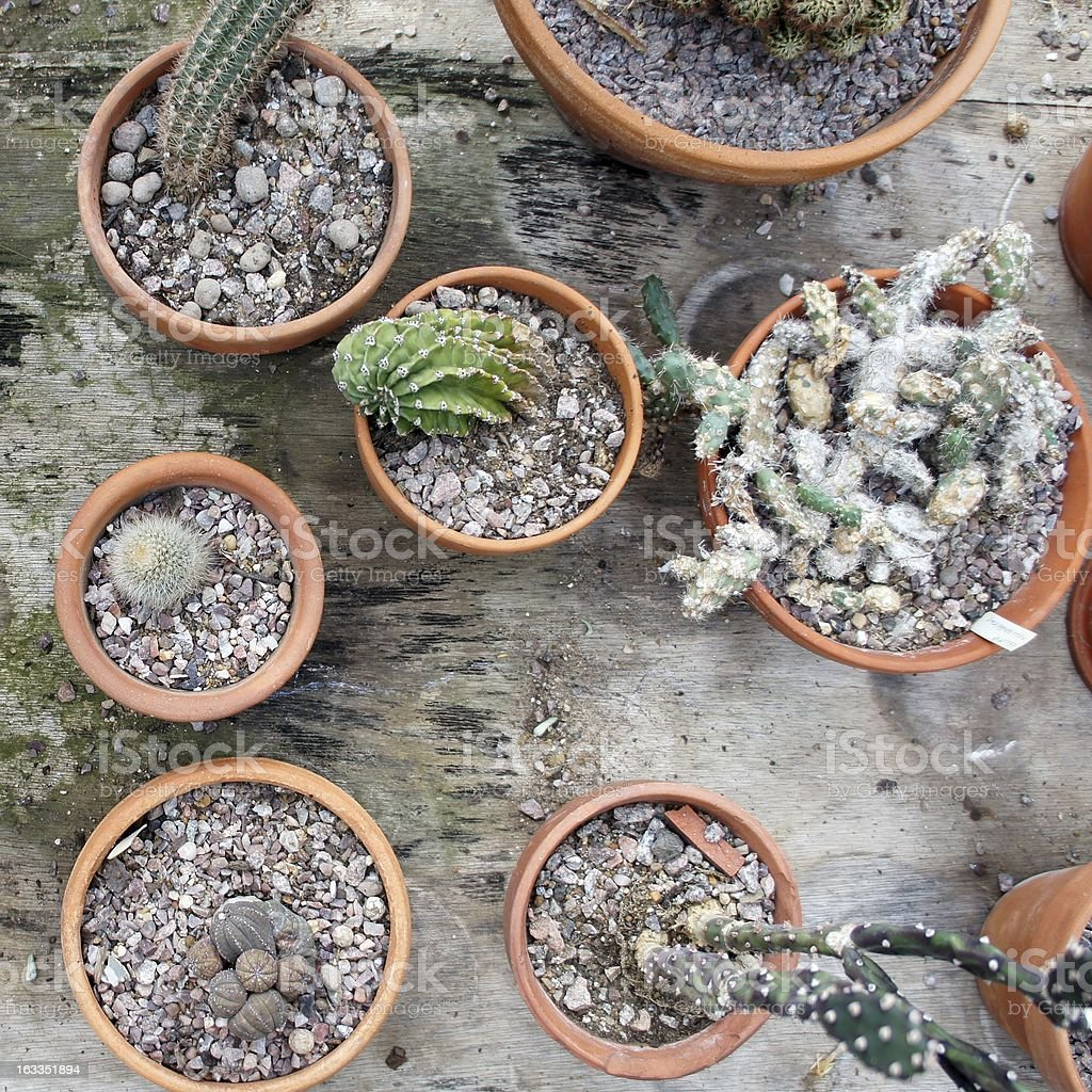 Cactus pots from above royalty-free stock photo