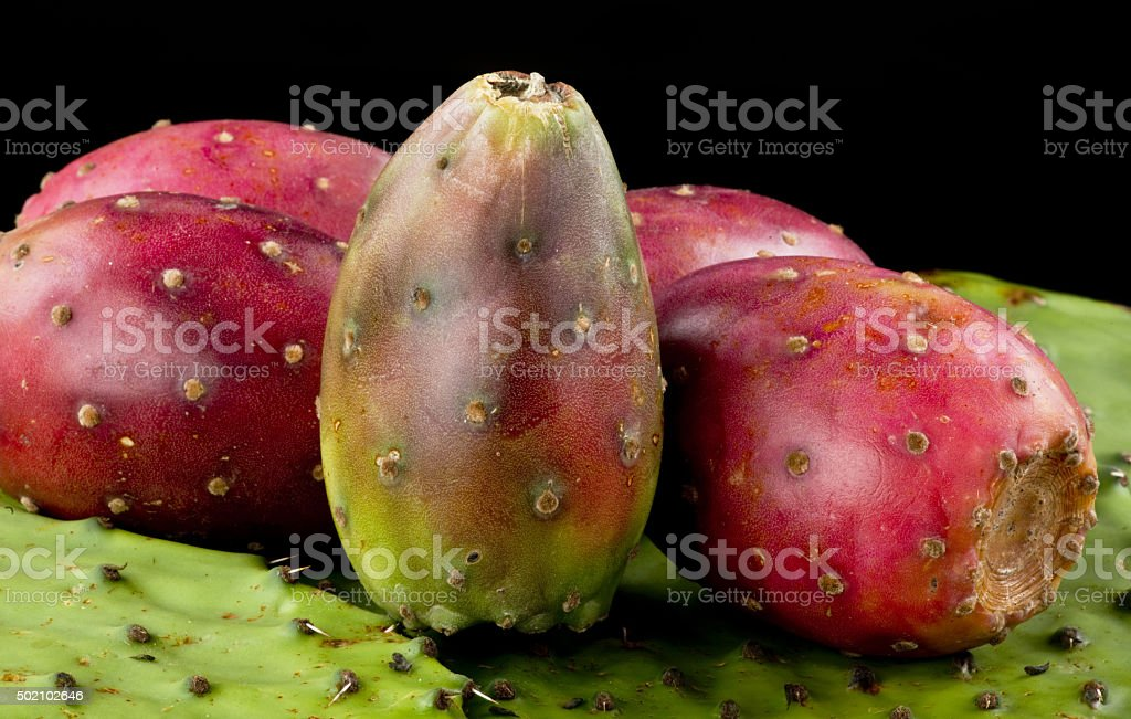 Cactus Prickly Pears. stock photo