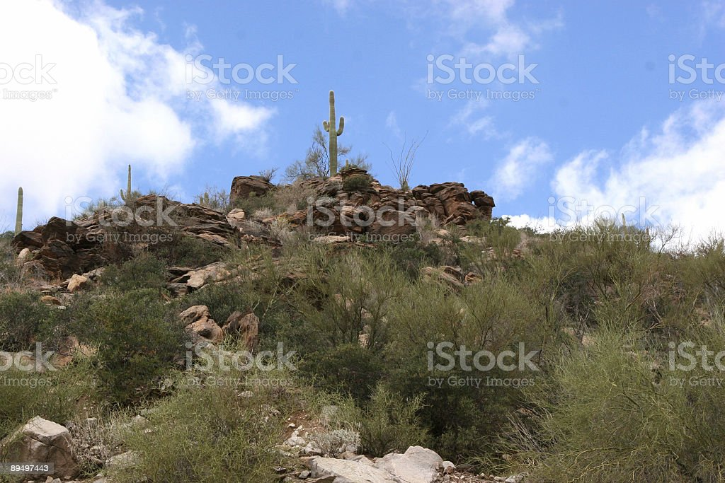Cactus Saguaro near Tucson royalty-free stock photo