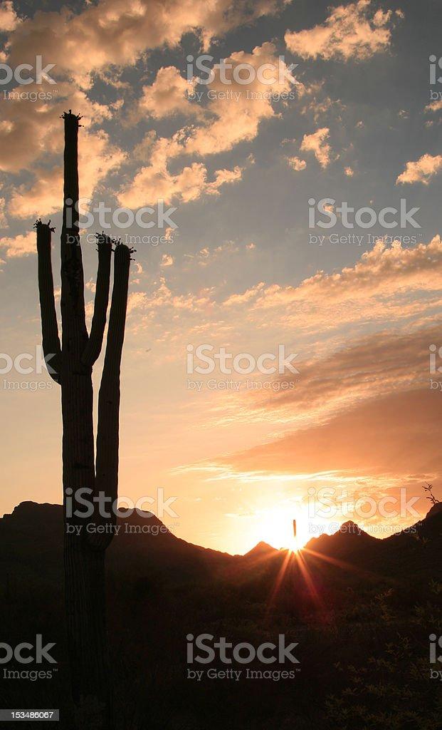 Cactus silhouette 1 royalty-free stock photo