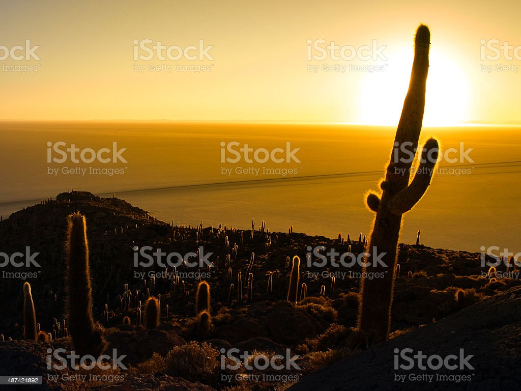 Cactus silhouette in sunrise on Salar de Uyuni stock photo