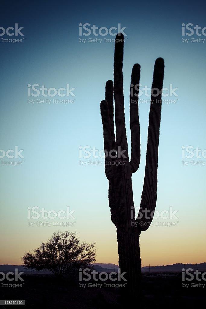 Cactus Silhouette stock photo