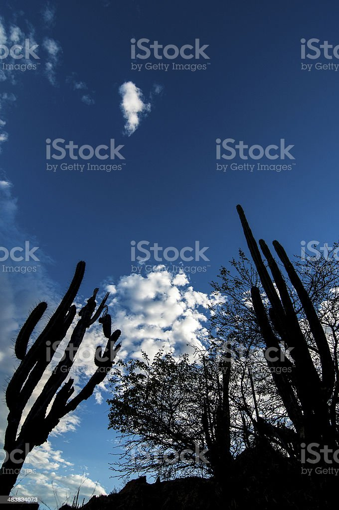 Cactus Silhouettes and Blue Sky stock photo