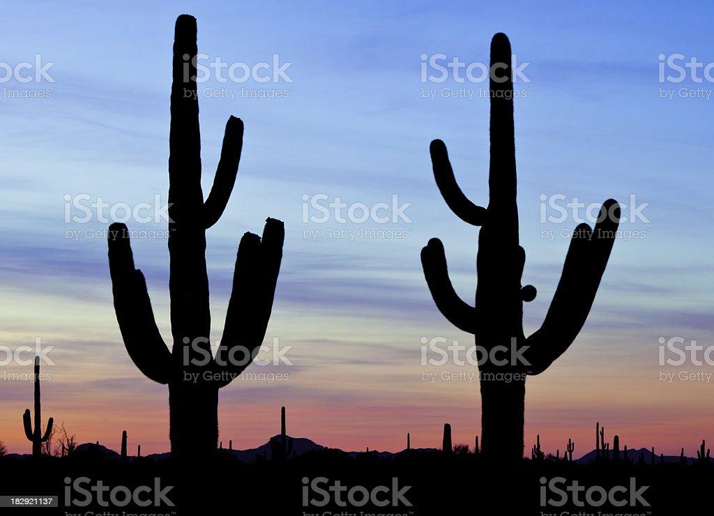 Cactus Silhouettes royalty-free stock photo