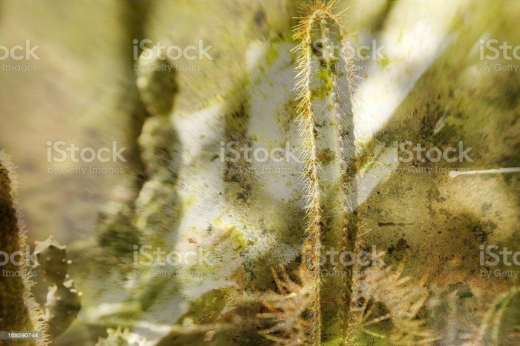 Cactus species royalty-free stock photo
