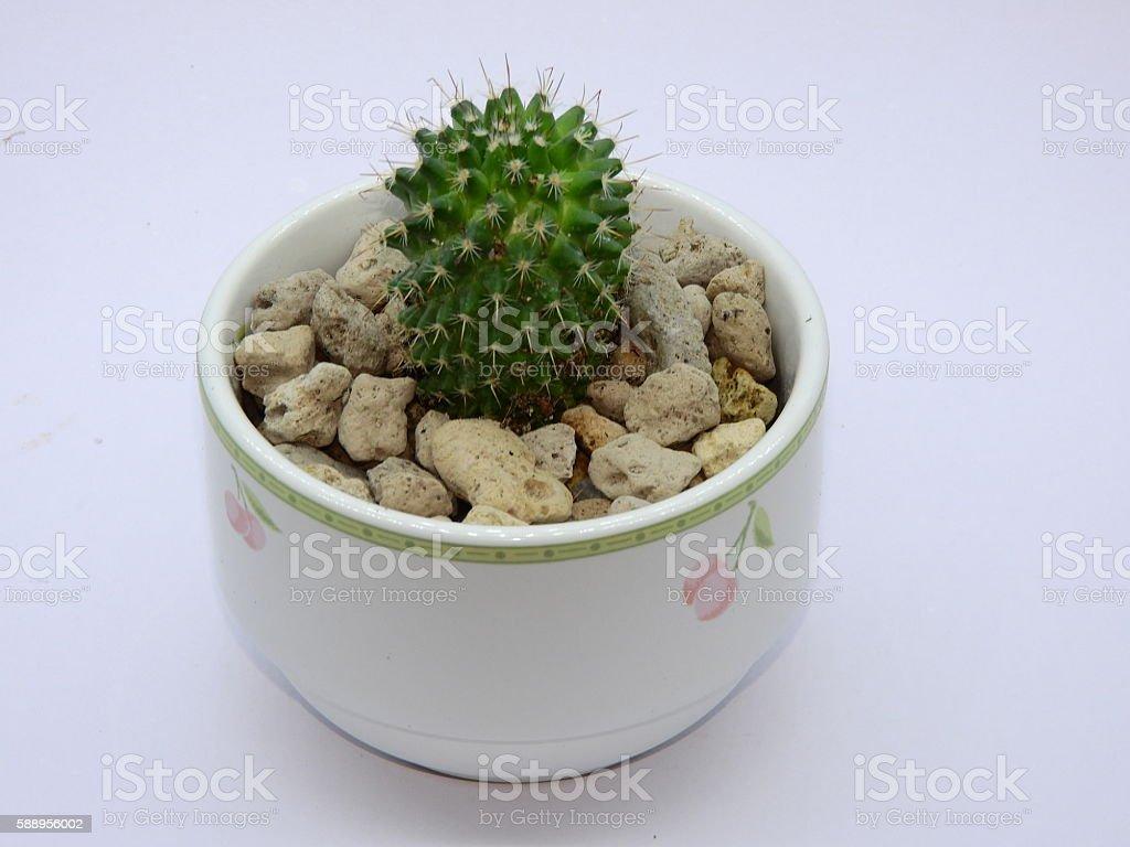Cactus sphere stock photo