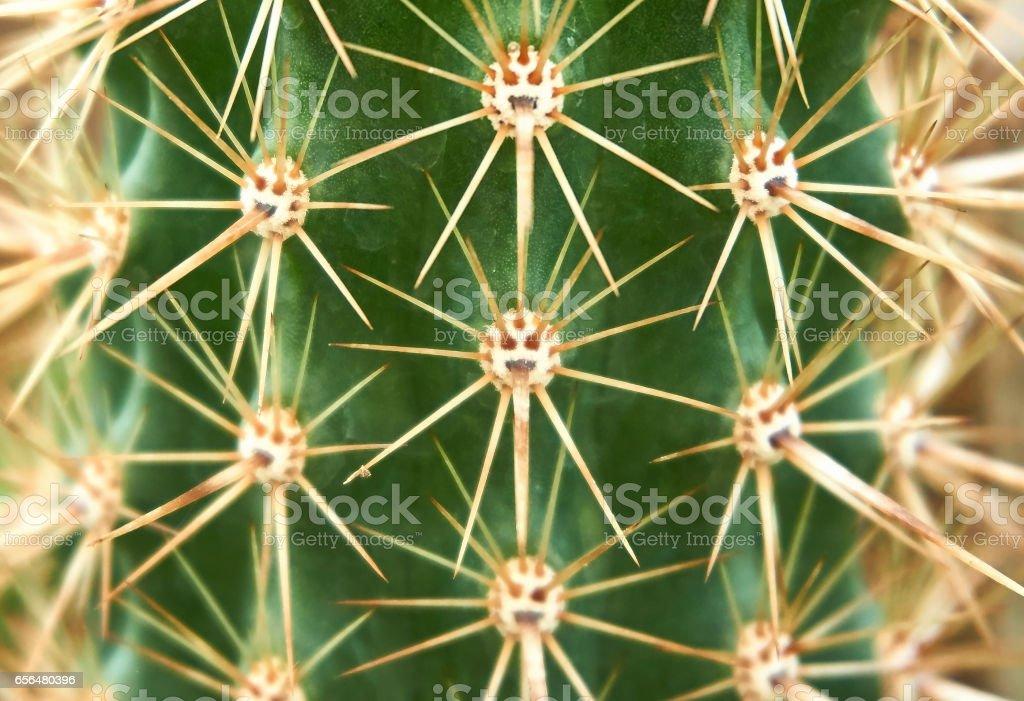 Cactus spike stock photo
