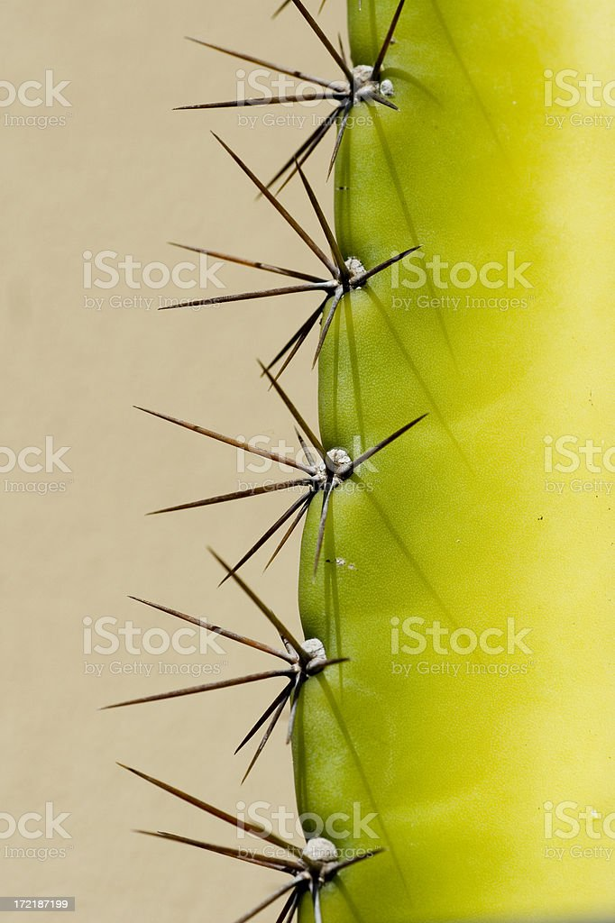 Cactus spikes detail royalty-free stock photo