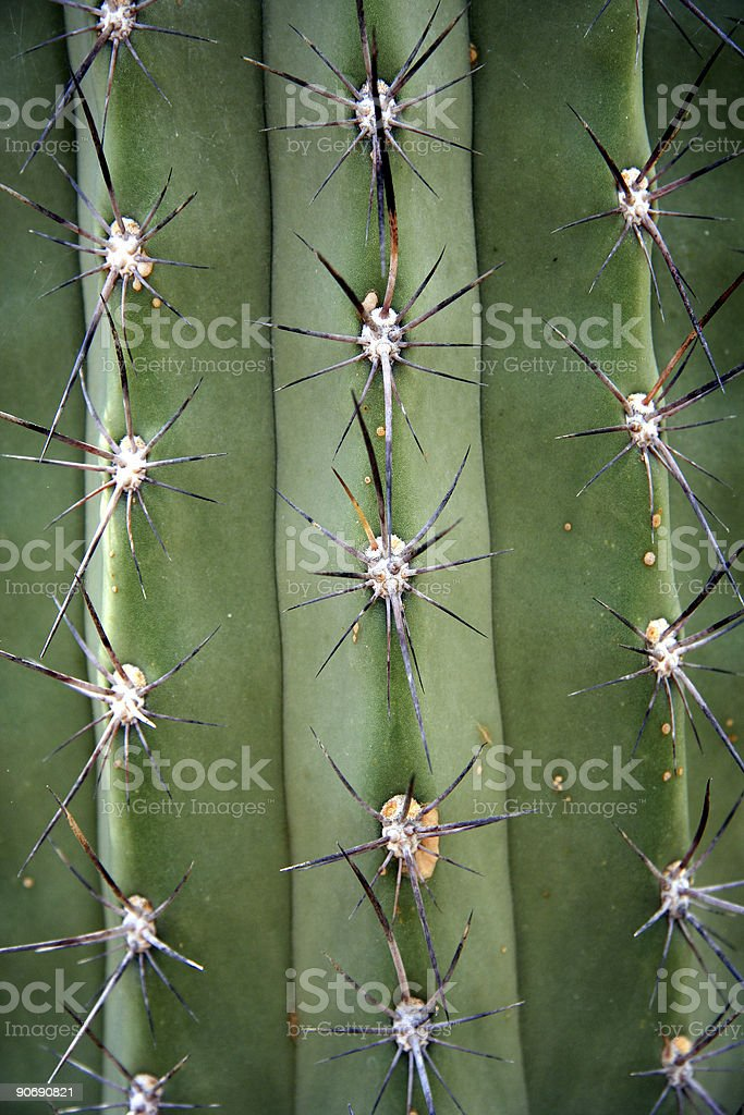 Cactus - Spikes of a Globe Thistle stock photo