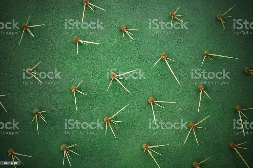 Cactus spikes stock photo
