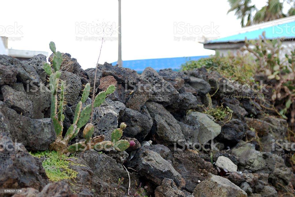 cactus & stone wall stock photo