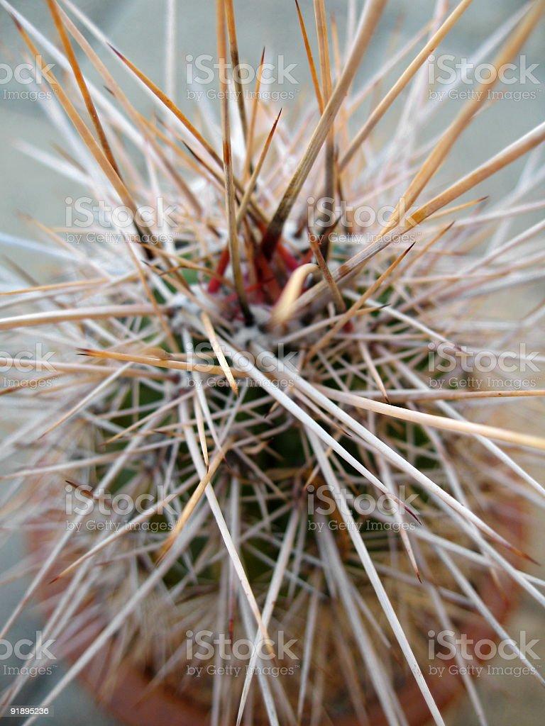 Cactus Thorns royalty-free stock photo