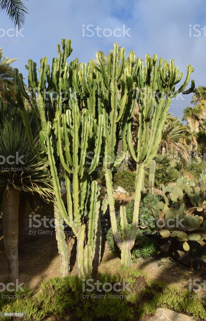 Variedades de Cactus stock photo