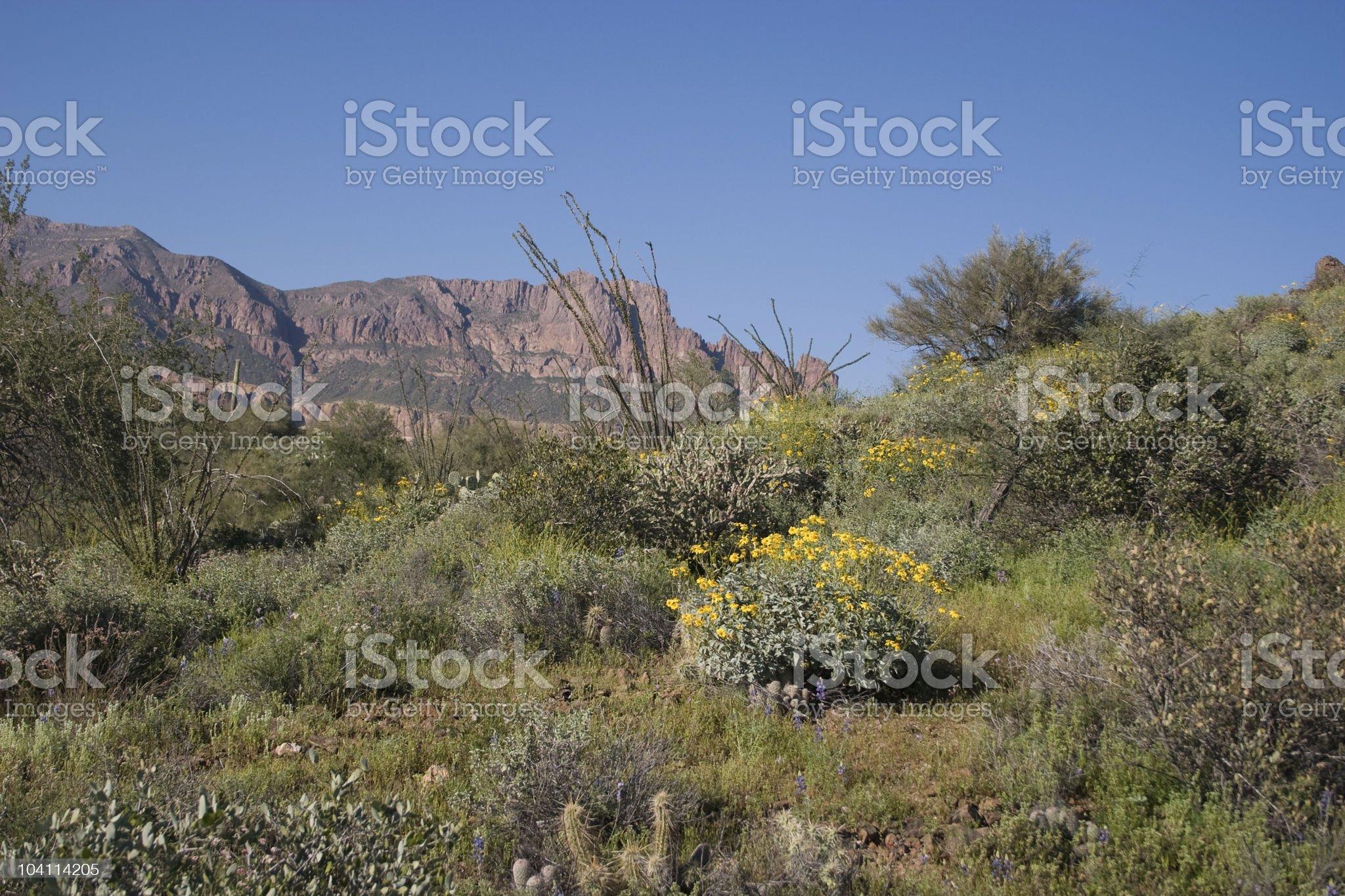 Cactus Variety royalty-free stock photo