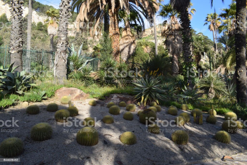 Variedad de Cactus stock photo
