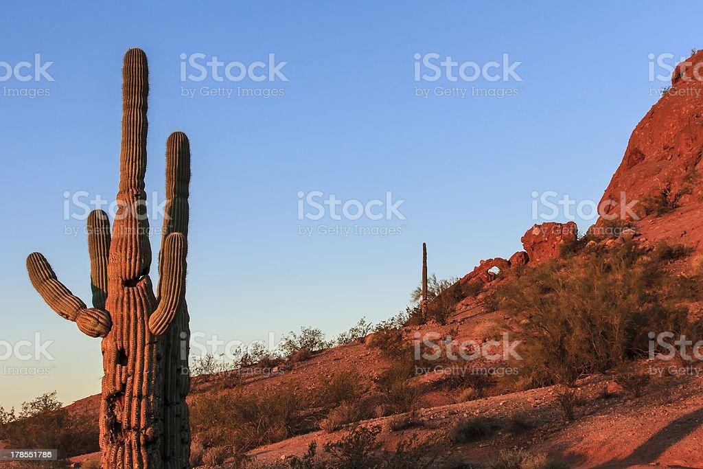 Cactus Warm Glow stock photo