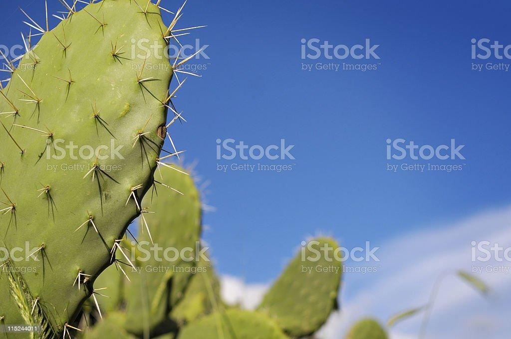 Cactus with blue sky stock photo