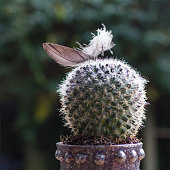 Cactus with feather together